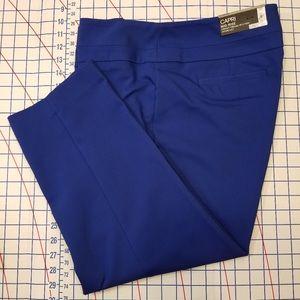 APT. 9 ROYAL BLUE CAPRI PANTS Size 14 NWT